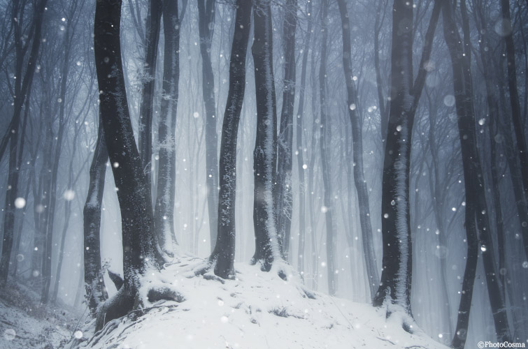 snow falling in mysterious winter forest